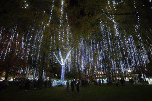 Harding University illuminates campus during annual lighting ceremony